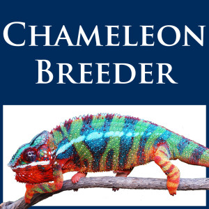 Chameleon Breeder Podcast with Bill Strand