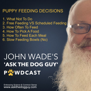 Puppy Feeding - How, What, Etc. Do's And Don'ts - A New Puppy Owner's Guide