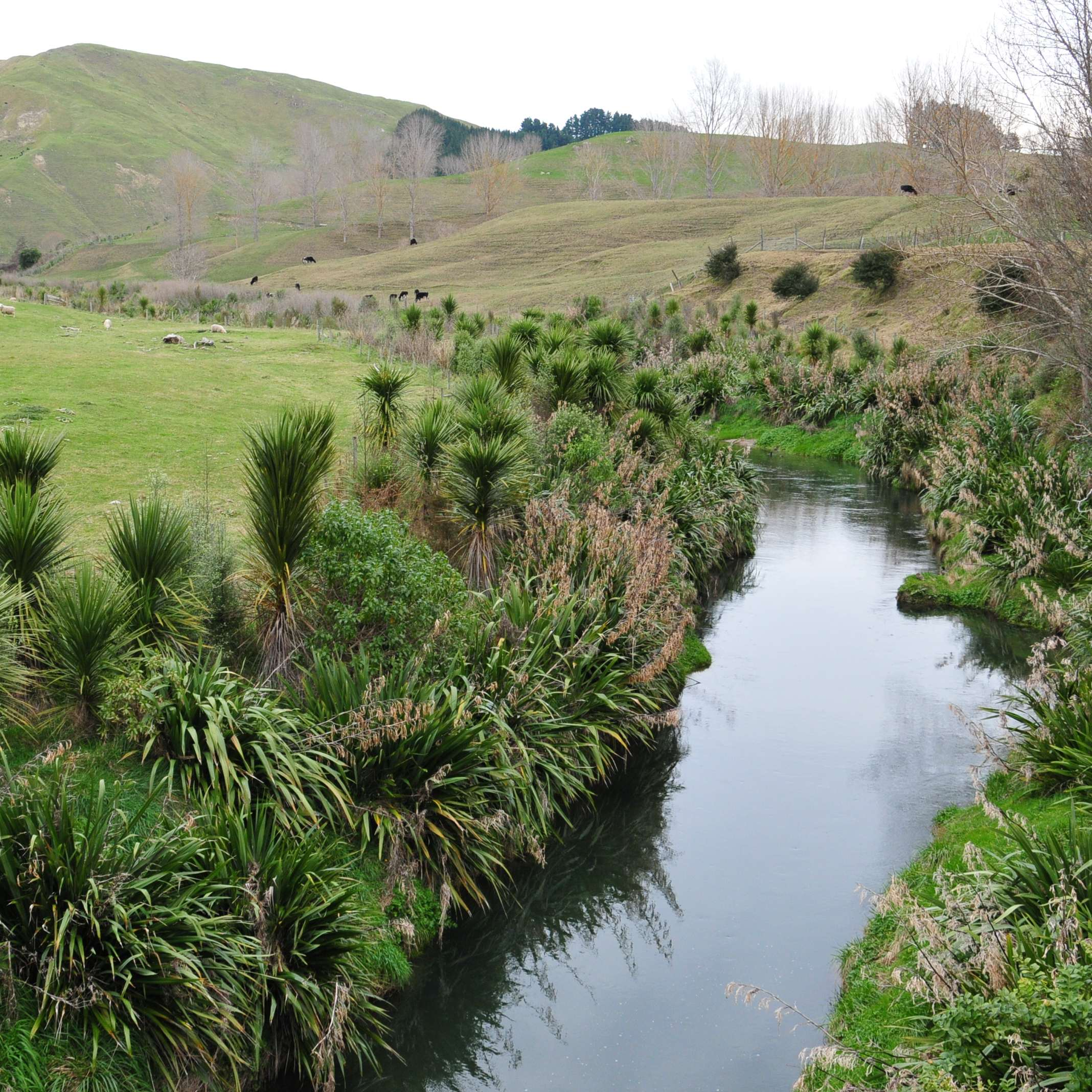 Regional Council Environment plans: be heard by decision makers