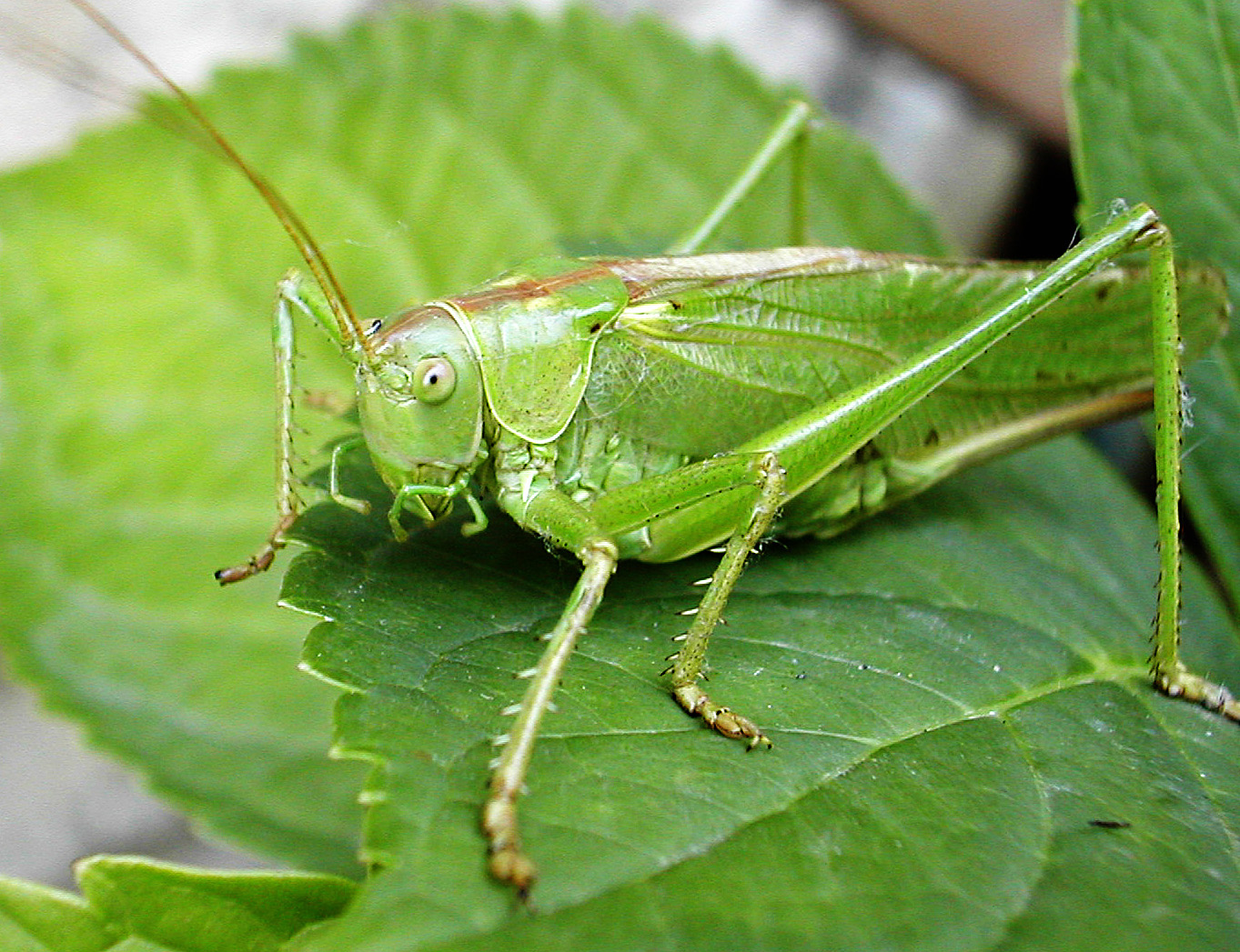 Organizing Tips just for Crickets - What ClutterBug Are You?