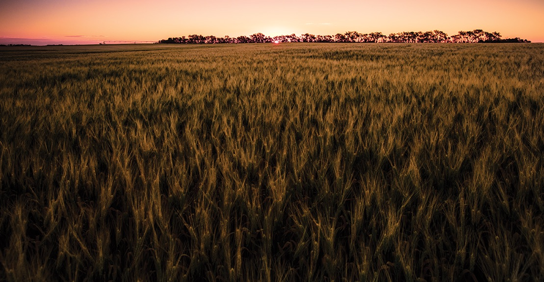 Find out what's brewing in the evolving world of barley.