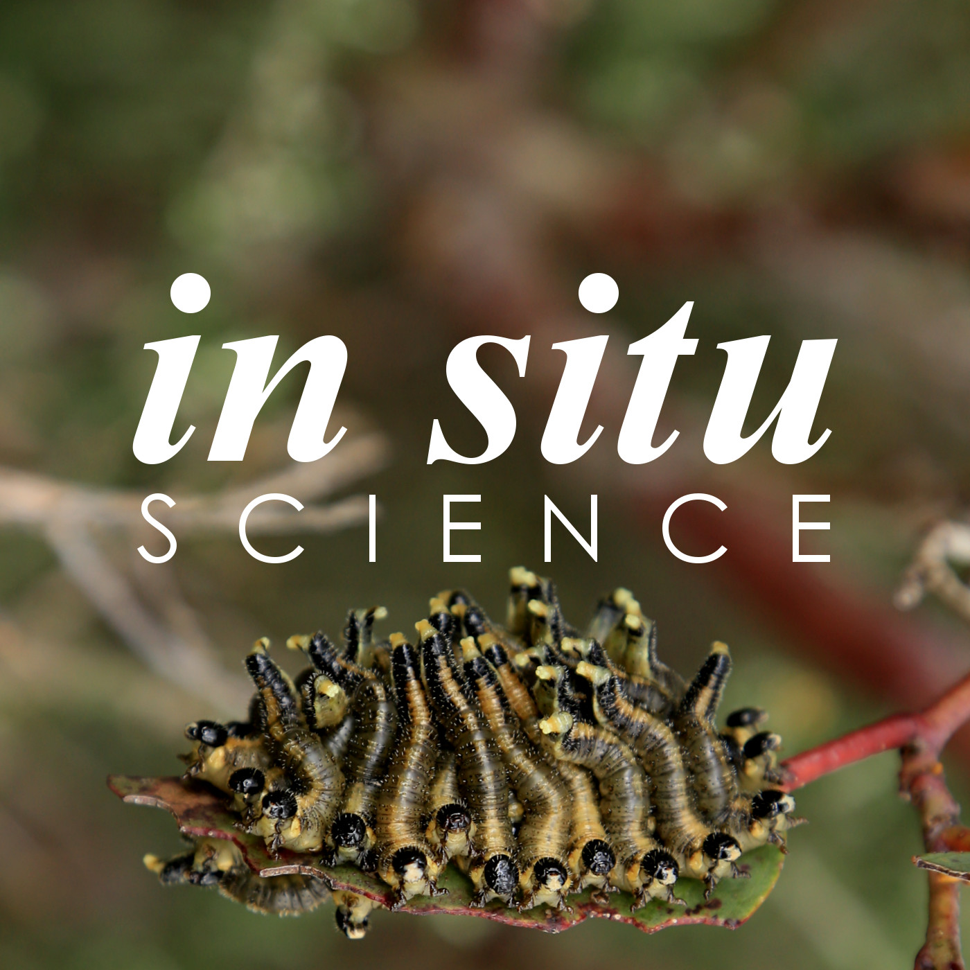Ep 72. Honey bees, slime moulds and velvet worms with Tanya Latty