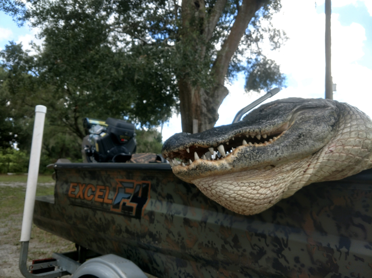 Hooking Gators In Florida! Glade Harris From BPS Is On The X