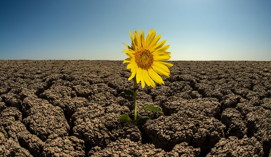 Ep. 1041: How Do You Bloom Where You Are Planted?