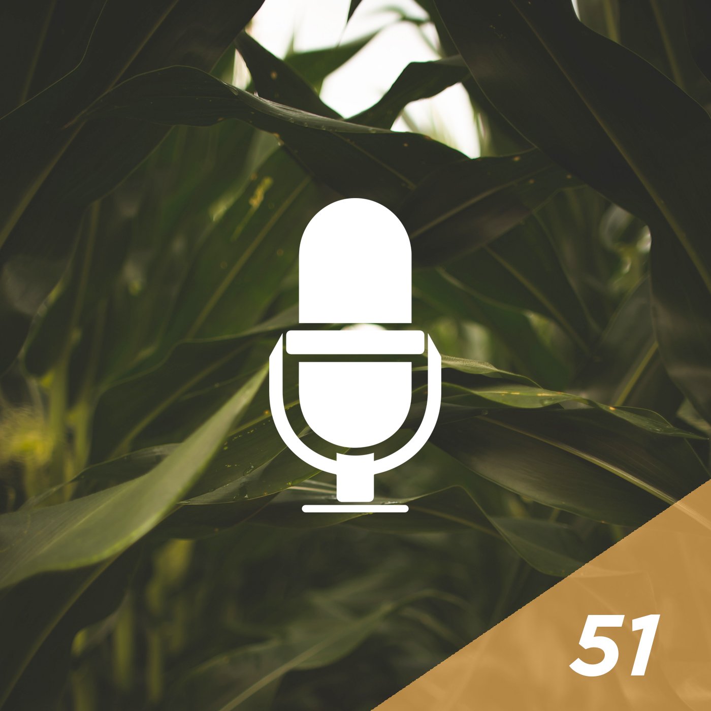 #51 - MPG Index: The Future of Corn Hybrid Selection