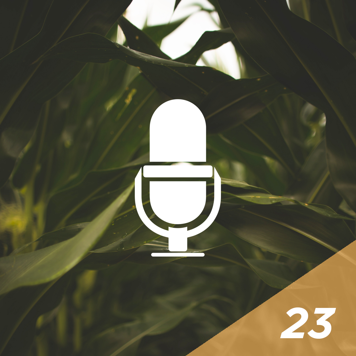 #23 - The Lost Podcast: How to Produce Corn Hybrids