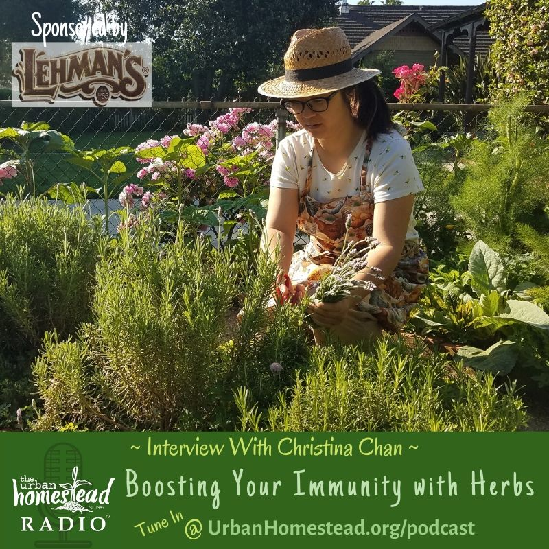 Urban Homestead Radio Episode 89: Boosting Immunity. Interview with Christina Chan
