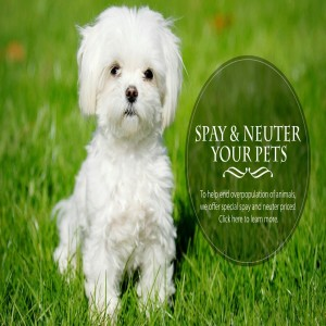 The Most Reliable Animal Hospital in Kamloops