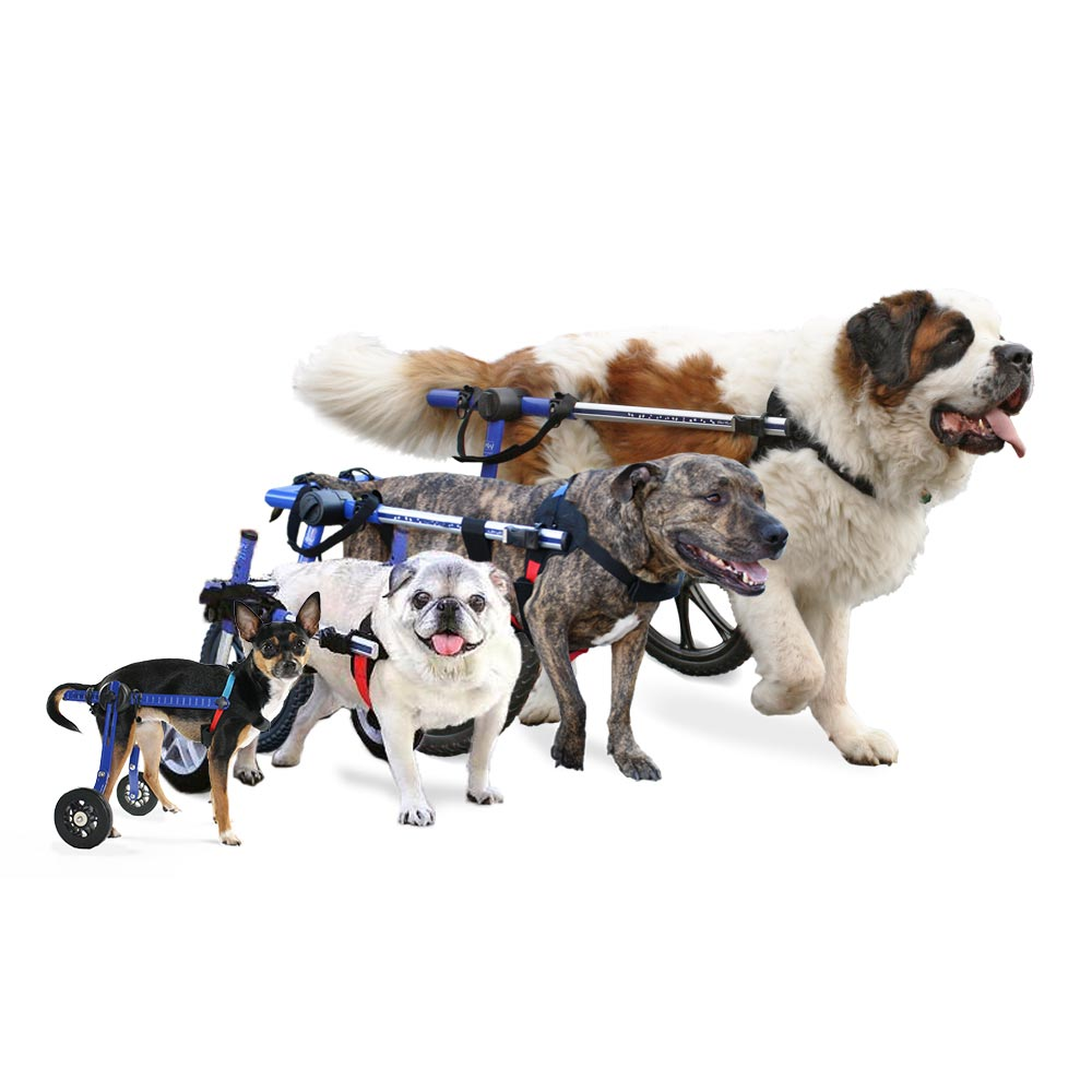 Dog Wheelchair. Guest Nancy Bregger, Sizing and Fitting Expert