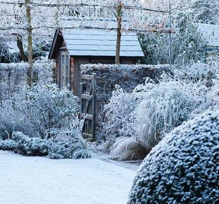Protect your Gardens from Freezing Temperatures