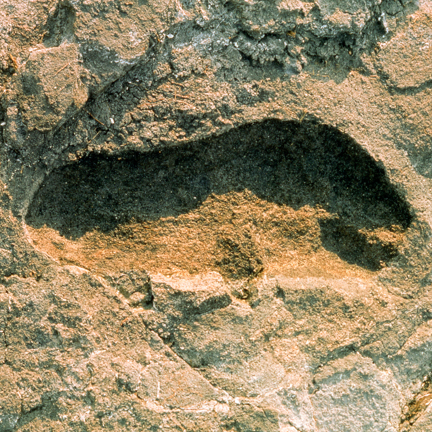 Where Our Human Ancestors Made an Impression