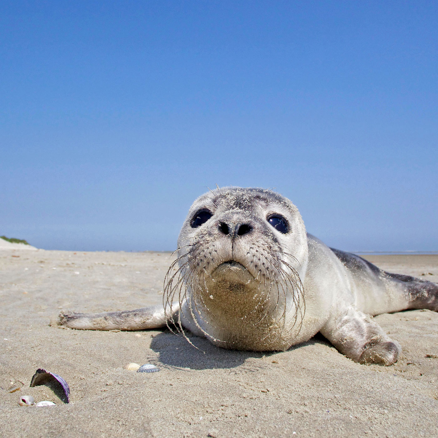 Reassessing Seal Rescue