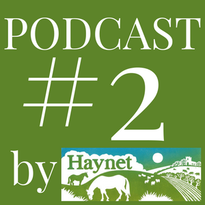 Haynet Podcast #2 What Is The Best Platform To Start Blogging?