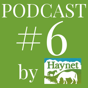 Haynet Podcast #6 Why You Should Use The #HorseBloggers Hashtag