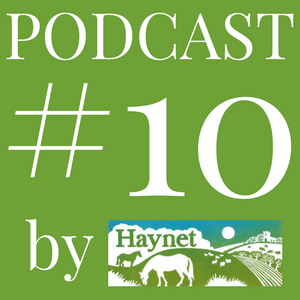 Haynet Podcast #10 _ Why You Should Use Video Marketing Your Business