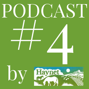 Haynet Podcast #4 What Makes A Good Blogger?