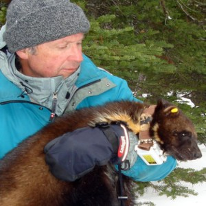 Episode 239: Wildlife Biologist and Four Fifths a Grizzly author Douglas Chadwick