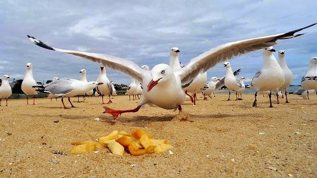 Don't be a Seagull - Good Manners May Seal that Deal - Vanessa with Angela Bishop & Clinton Maynard