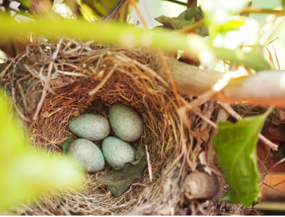 32. Birds do it!  Nesting…time to look with fresh eyes at our home