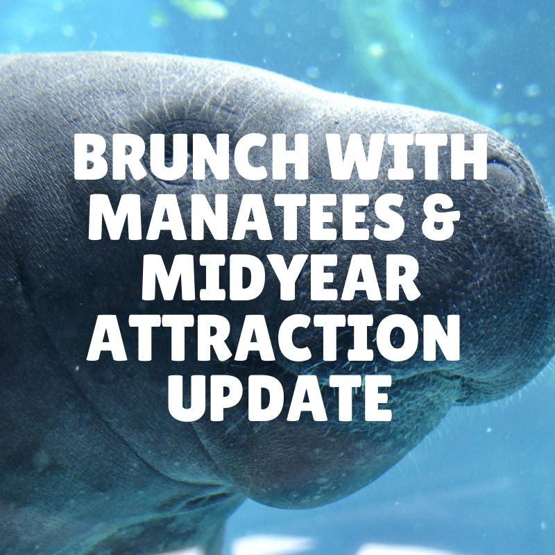 Brunch with Manatees & a Midyear attraction update