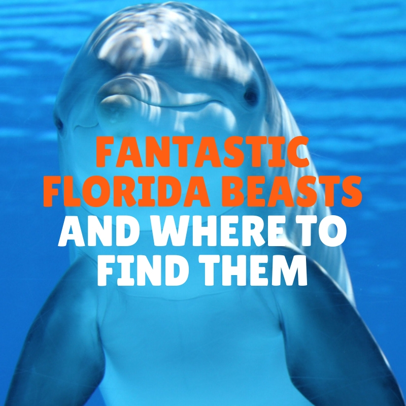 Fantastic Florida Beasts and Where to Find Them