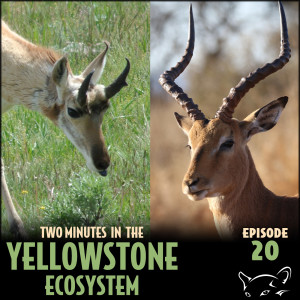 Episode 20: Animals With the Wrong Names