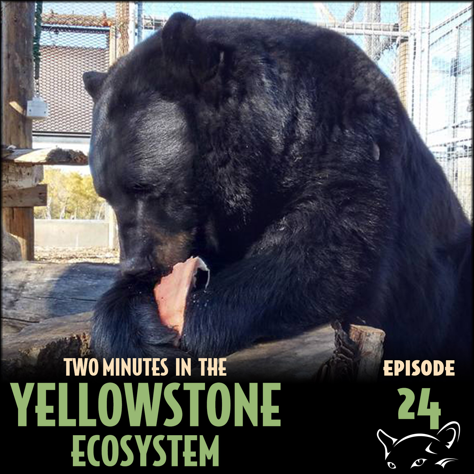Episode 24: Hyperphagic Bears