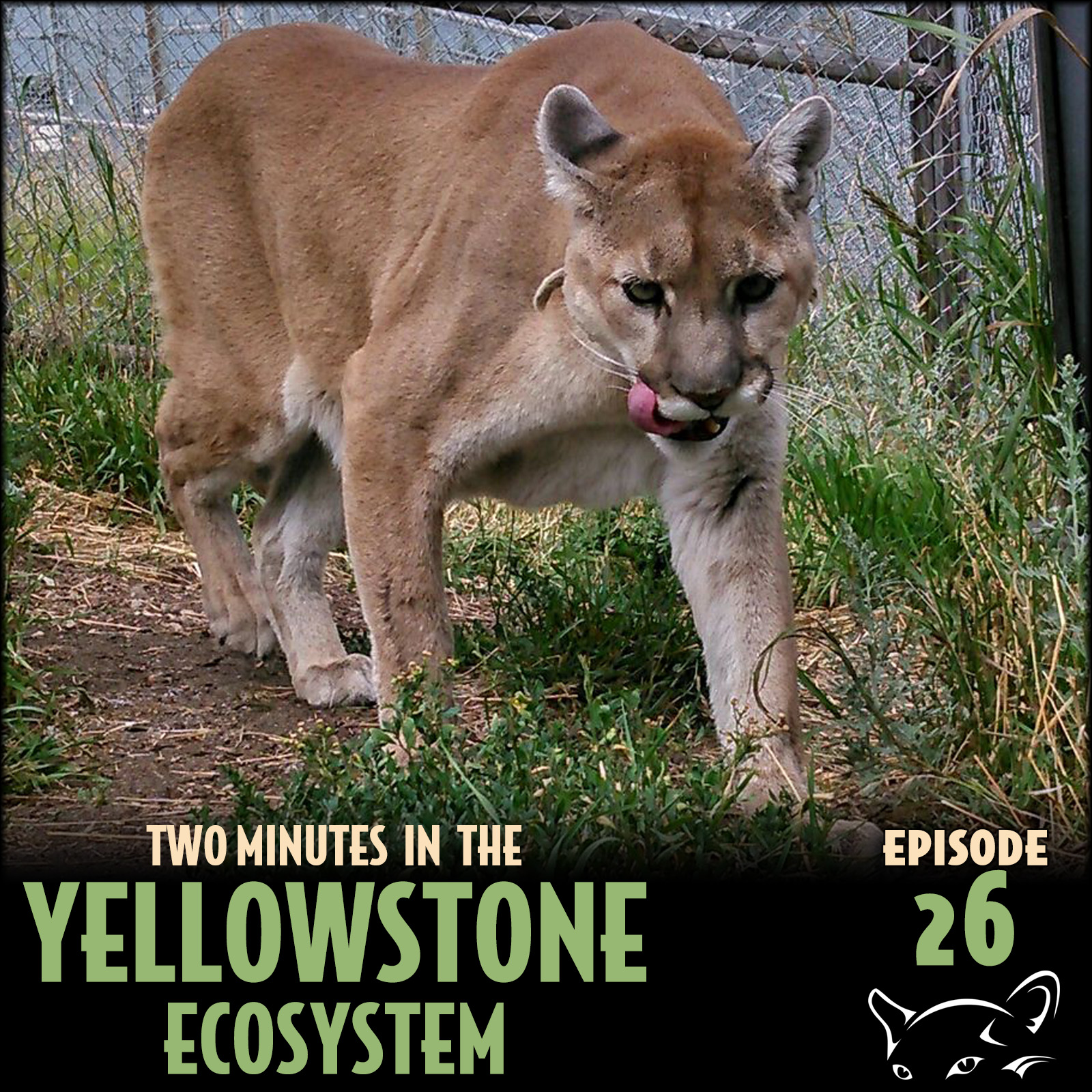 Episode 26: Mountain Lions