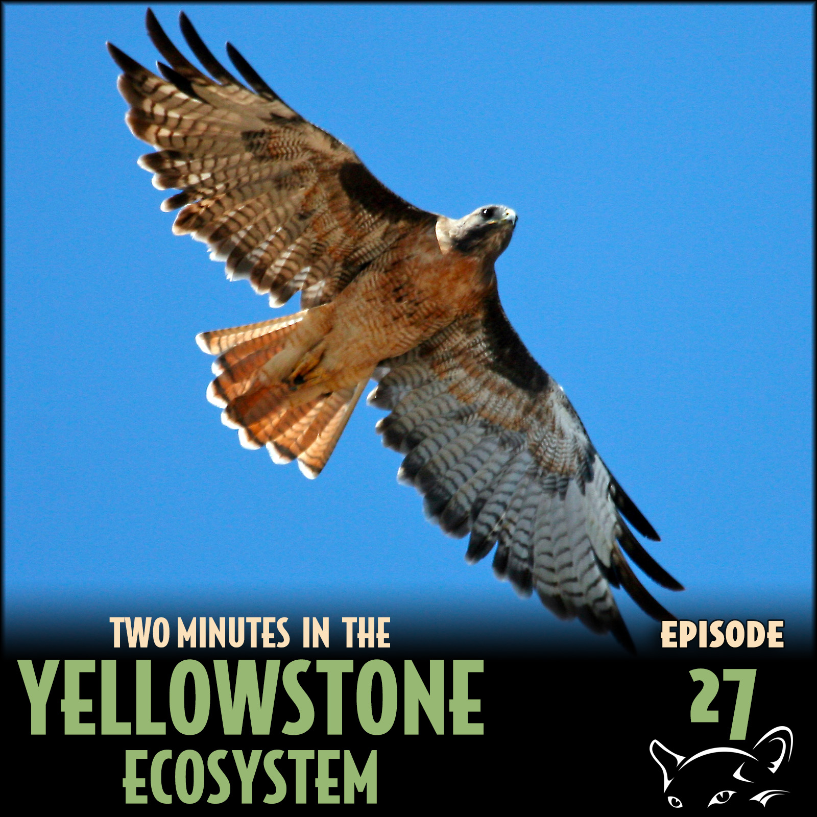 Episode 27: Red-Tailed Hawks
