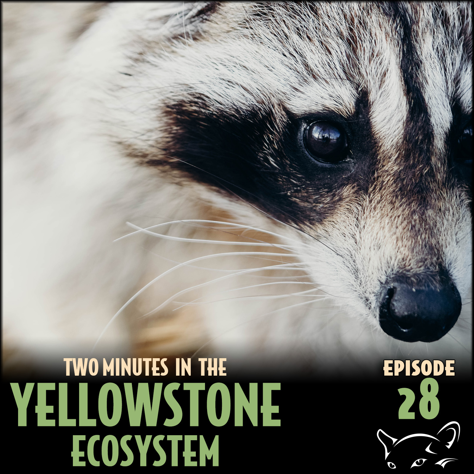 Episode 28: Raccoons and Rabies