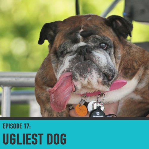 The World's Ugliest Dog Competition - Episode 017