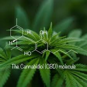 Episode 3 - CBD for You and Your Pets