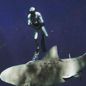 This Ocean Life, Episode 28 - Mike Bolton and a Life with Sharks