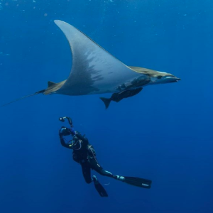 #54: Stefano Ulivi - Diving and filming the Azores, shark conservation