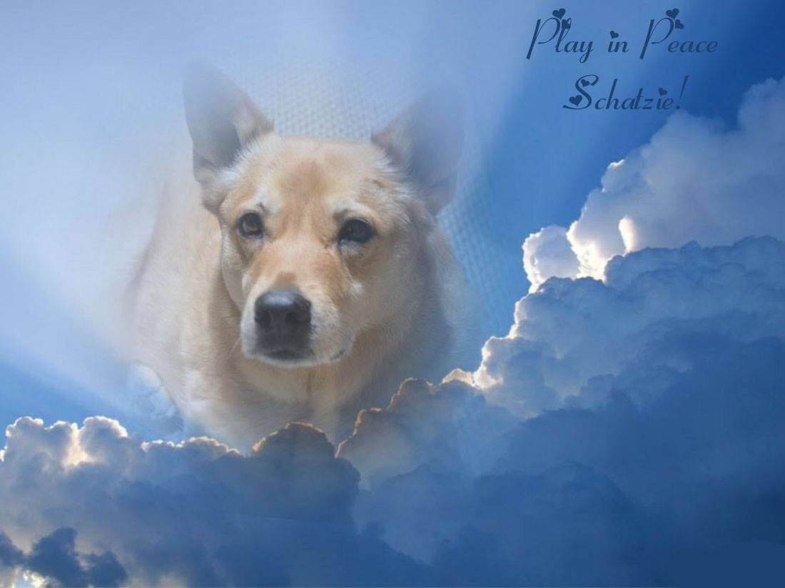 Farewell to Schatzie the Carolina Dog