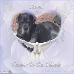 Of Dogs and Angels