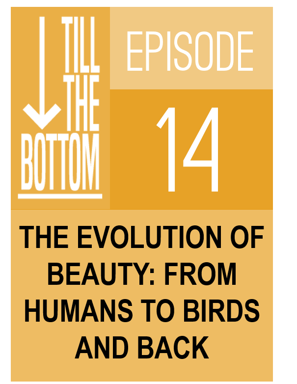 Episode 14. The evolution of beauty: from humans to birds and back