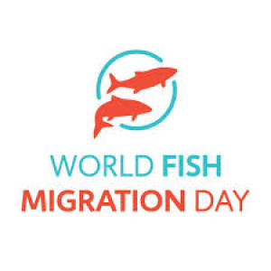 090 - World Fish Migration Day with Herman Wanningen