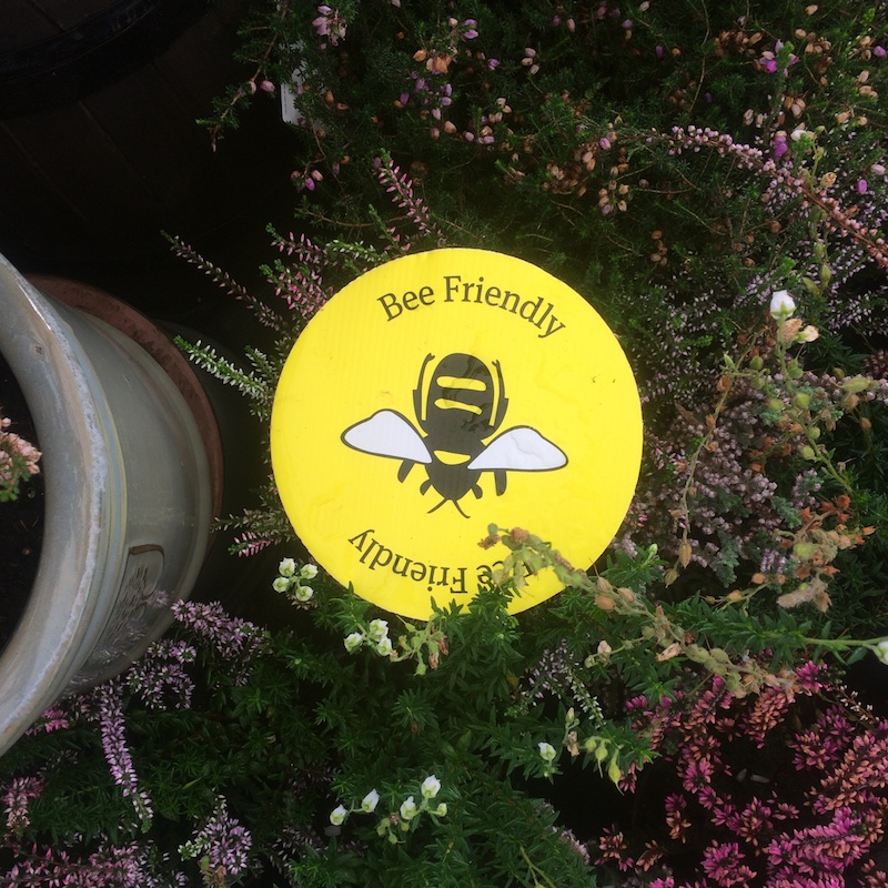 Veronica Wignall: Garden centres & pollinator-friendly planting - a missed opportunity?