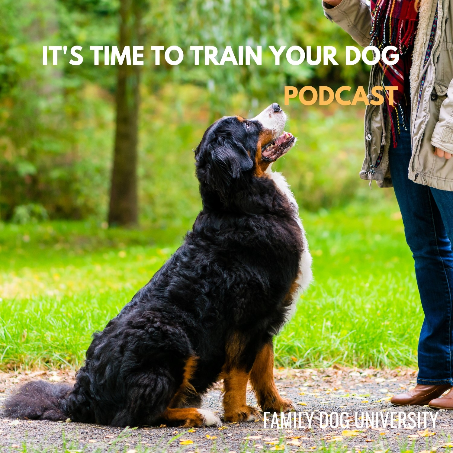 It's Time to Train Your Dog