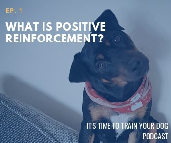 What is Positive Reinforcement?