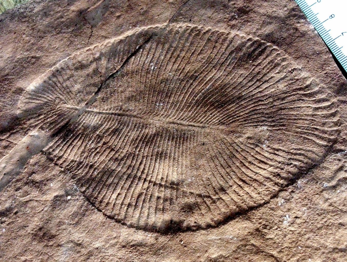On the FOSSIL Record episode 2: The Cambrian Explosion