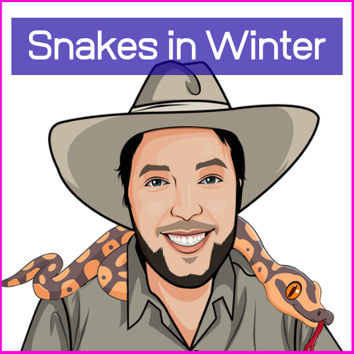 The Reptile Bloke ~ Snakes in Winter