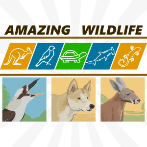 Kookaburras | Dingoes | Red Kangaroo