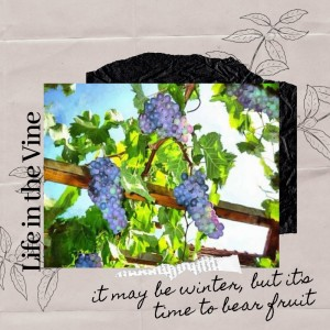 Life in the Vine: Time