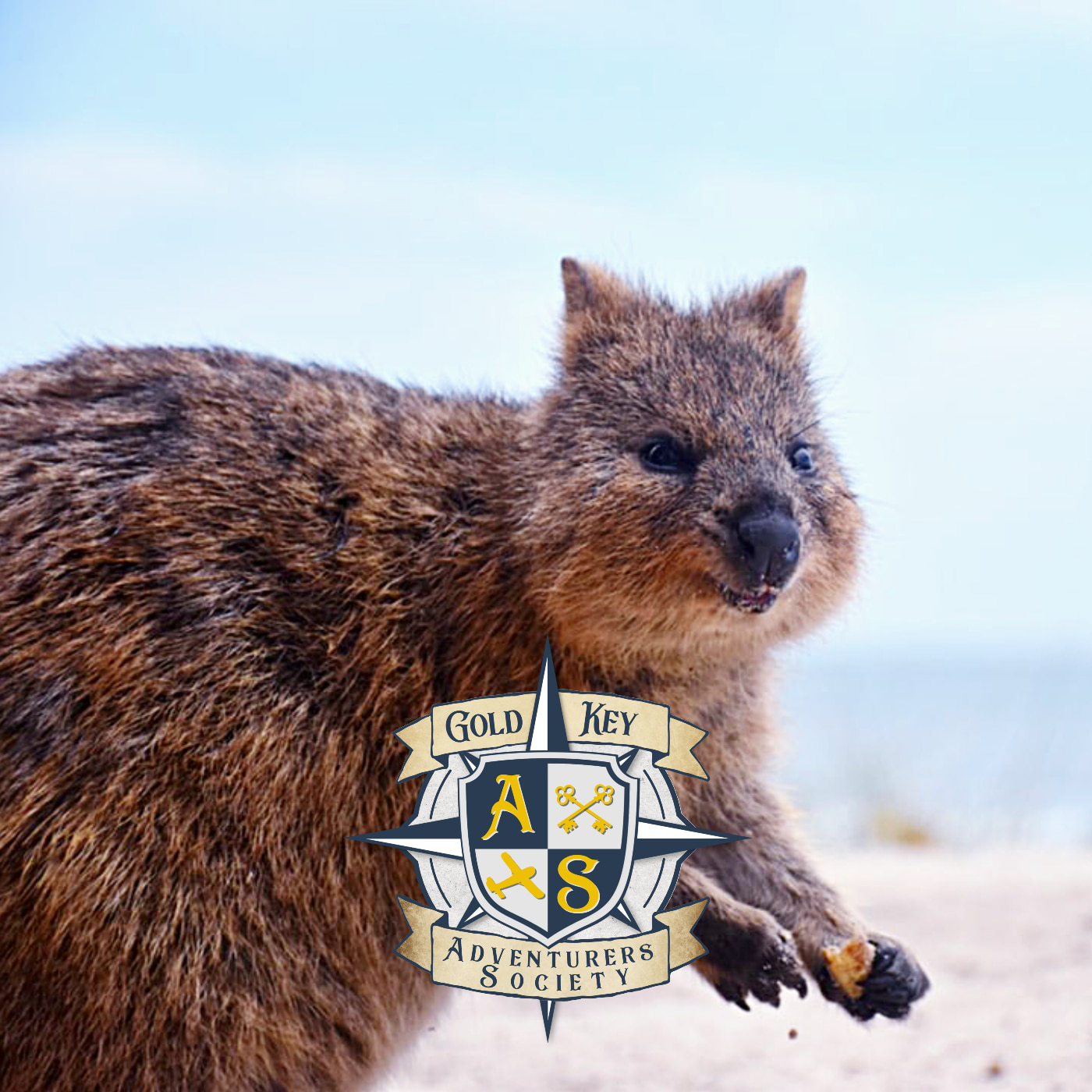 2020 Travel Trends Part 3: Rise of the Quokka