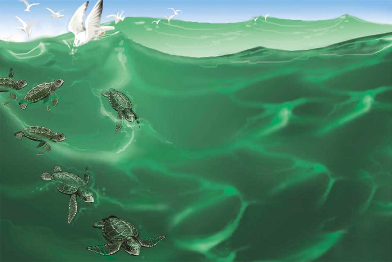 Turtle Story   Conservation Stories for Kids   Bedtime Stories