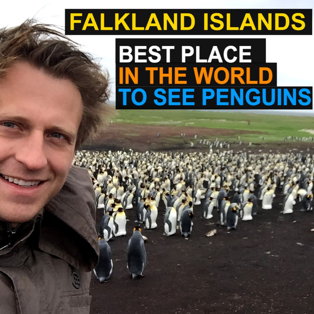 Falkland Islands - Best Place in the World to see Penguins