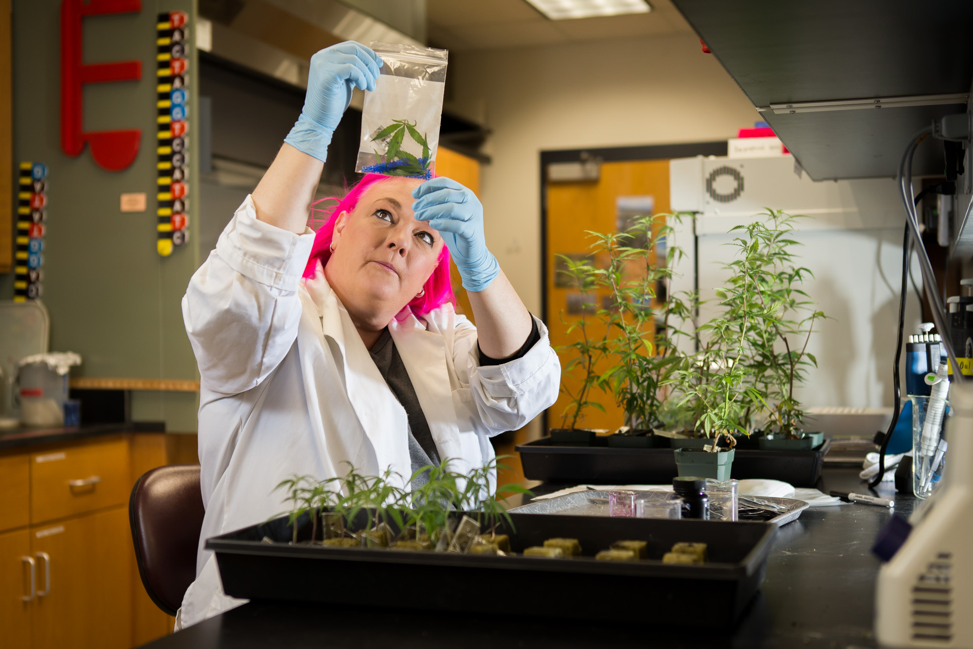Cannabis Science Today