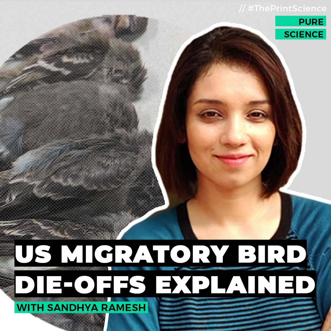 Pure Science: Why are birds dropping dead from the sky in America?